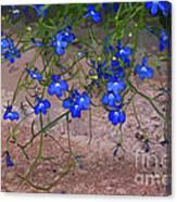 Tiny Blue Flowers Canvas Print