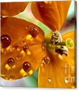 Tiny Dew Drop On Wild Flower Macro Canvas Print