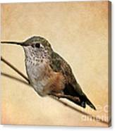 Tiny Hummingbird Resting Canvas Print