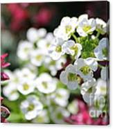 Tiny Pink And Tiny White Flowers 2 Canvas Print
