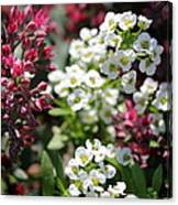 Tiny Pink And Tiny White Flowers Canvas Print