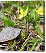 Tiny Turtle Close Up Canvas Print
