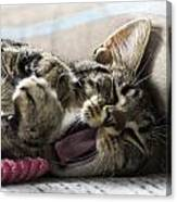 Tired Cat Canvas Print