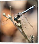 Tired Dragonfly Square Canvas Print