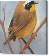 Tit Bird Canvas Print