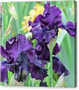 Titan's Glory Iris Canvas Print