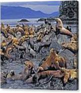 Tk0440, Thomas Kitchin Steller Sea Canvas Print