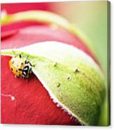 To Live Upon Such Colored Satin Canvas Print