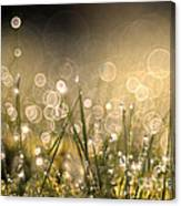 To Sparkle Canvas Print