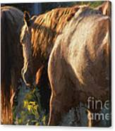 To The Barn Canvas Print