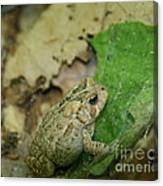 Toad Under Cover  Canvas Print
