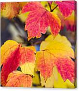 Toasted Autumn - Featured 3 Canvas Print