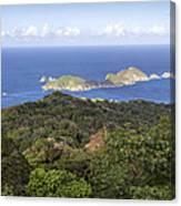 Tobago Rainforest Canvas Print