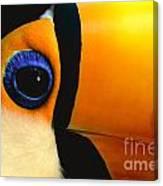 Toco Toucan Face Canvas Print