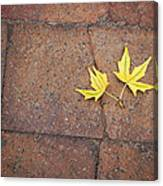 Together Yellow Maple Leaves Canvas Print