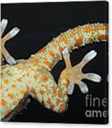 Tokay Gecko Feet Canvas Print