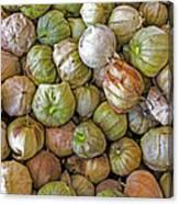 Tomatillos At The Local Market Canvas Print