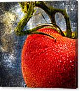 Tomato On A Vine Canvas Print