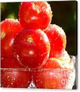 Tomatoes 2 Canvas Print