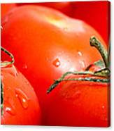 Tomatoes. Canvas Print