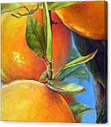 Tombee d Oranges Canvas Print