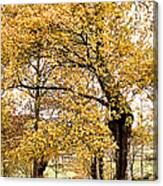 Tombs Under Oaktree Canvas Print