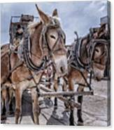 Tombstone Mules Canvas Print