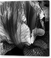 Tones Of Iris Canvas Print