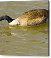 Tongue In Goose I Canvas Print