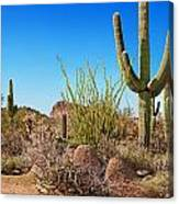 Tonto National Forest Cactus Canvas Print