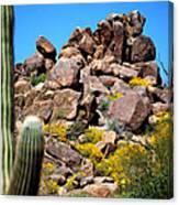 Tonto Saguaro Rocks 10189 Canvas Print
