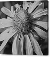 Too Wide Bw Canvas Print