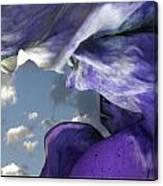 Torn Curtain Canvas Print