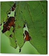 Torn Leaf Abstract Canvas Print