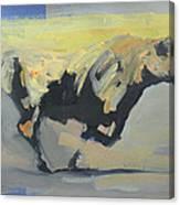 Toro Study  Canvas Print