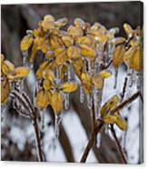 Toronto Ice Storm 2013 - My Garden In The Morning Canvas Print