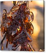 Toronto Ice Storm 2013 - Oak Leaves Jewelry Canvas Print