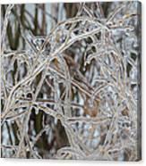 Toronto Ice Storm 2013 - Pale Frozen Grasses  Canvas Print
