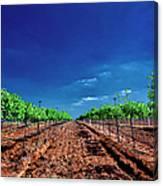 Torre Di Pietra Winery Canvas Print