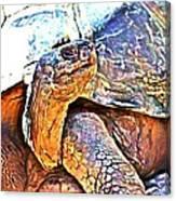 Tortoise Gouache Canvas Print