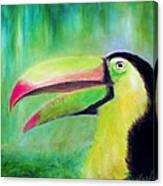 Toucan Land Canvas Print