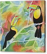 Toucan Play At This Game Canvas Print