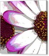 Touch Of Pink Osteospermum Trio B Canvas Print