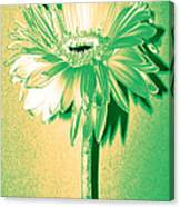 Touch Of Turquoise Zinnia Canvas Print