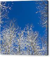 Touching The Winter Sky Canvas Print