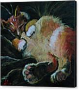 Toughie Canvas Print
