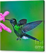 Tourmaline Sunangel Canvas Print