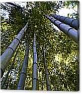 Towering Bamboo Canvas Print