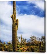 Towering Saguaro Canvas Print