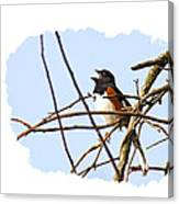Towhee Singing On Top Of Mountain Canvas Print
